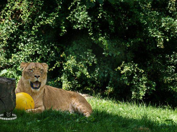 Zoo Leipzig - Den Tieren ganz nah