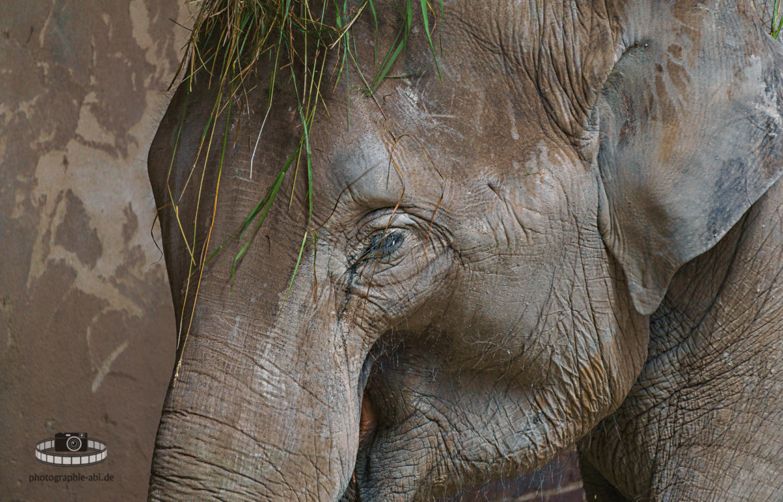 Zoo Leipzig – Elefant im Portrait