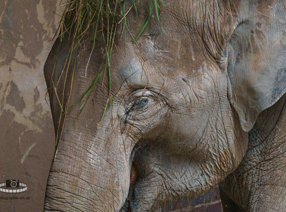 Zoo Leipzig - Elefant im Portrait