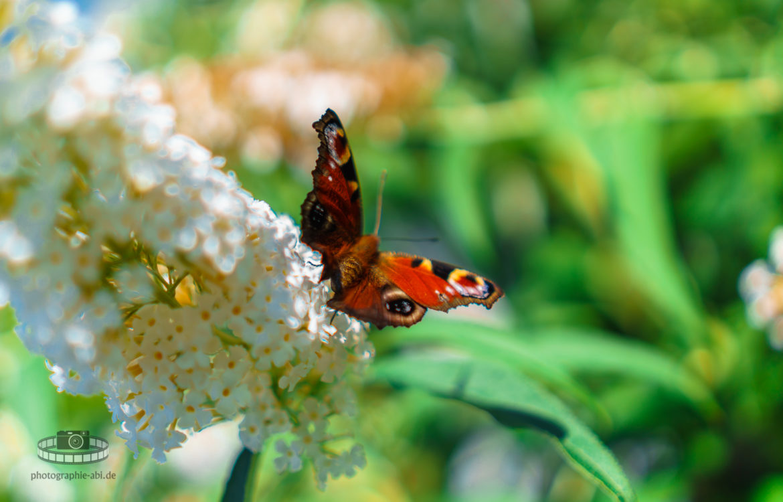 Im Land der Schmetterlinge