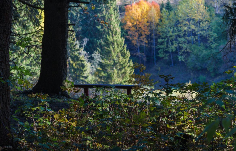Unterwegs im Herbstwald