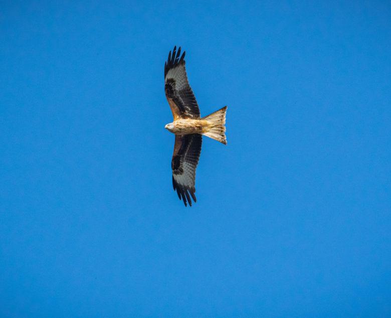Der Natur auf der Spur – Vögel Fotografieren